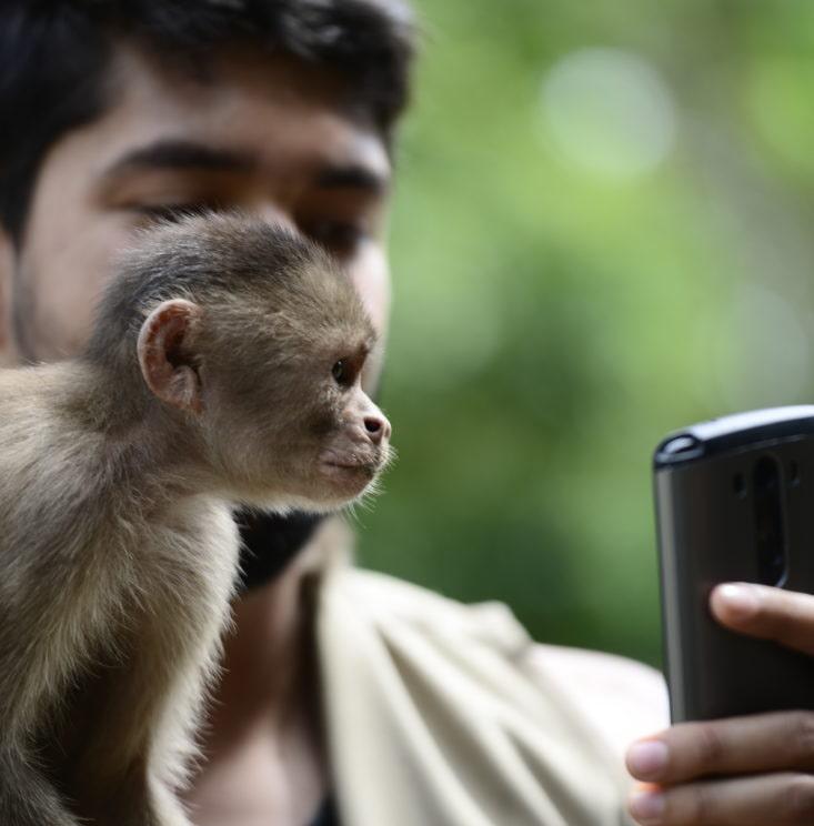 monkey-island-iquitos-peru